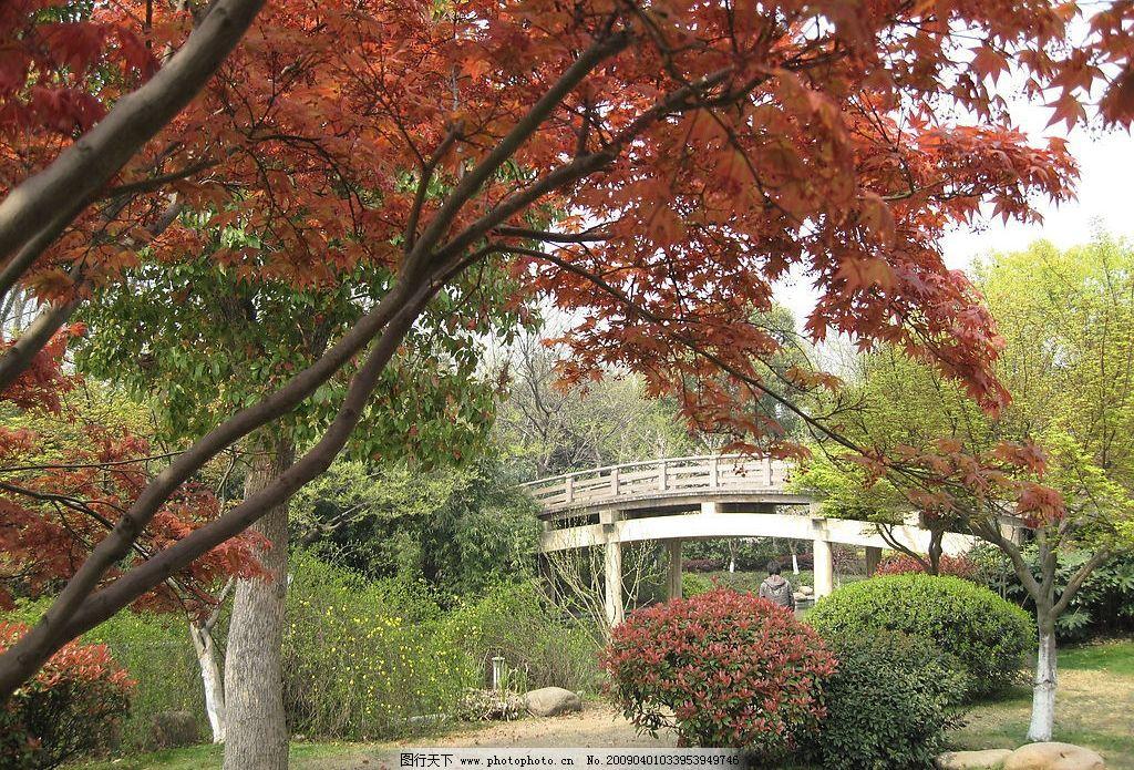 壁纸 枫叶 风景 红枫 树 1024_695