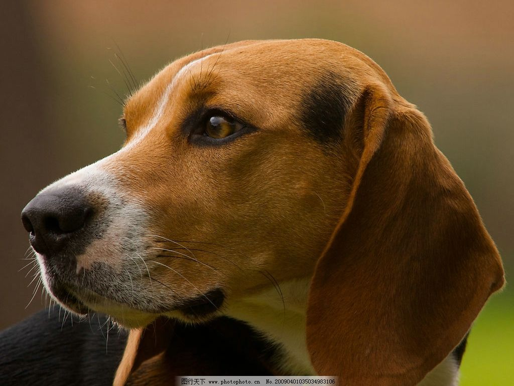 可爱宠物狗图片