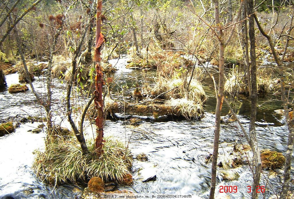 九寨沟的春天 森林 水 旅游摄影 自然风景 摄影图库