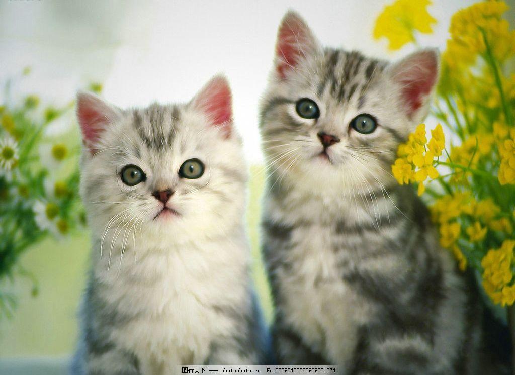 两只猫 两只可爱的猫 花 其他 图片素材 摄影图库
