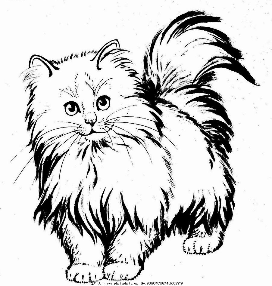 波斯猫 猫 动物 家禽 白描 线描 黑白稿 白猫 工笔画 绘画 生物世界