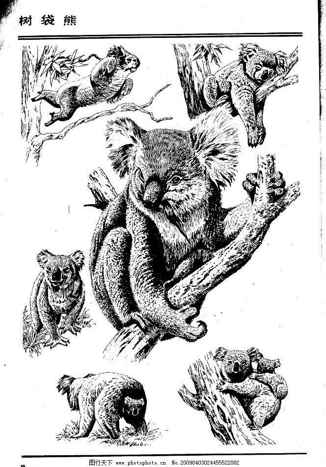 画兽图 树袋熊 百兽 兽 家禽 猛兽 动物 白描 线描 绘画 美术 禽兽 野