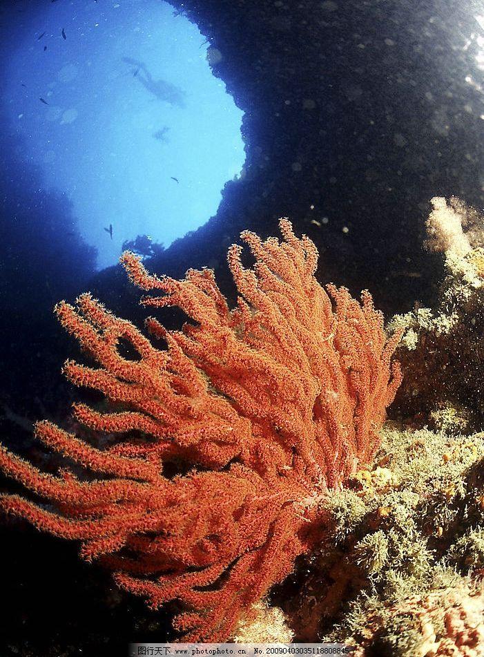 珊蝴礁石 海底游泳 海底世界 潜水 海洋 鱼类 摄影图库