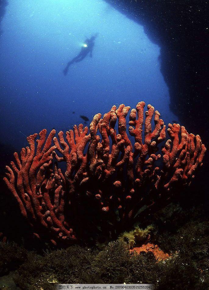 海底世界 海底游泳 潜水 海洋 珊蝴 礁石 鱼类 摄影图库