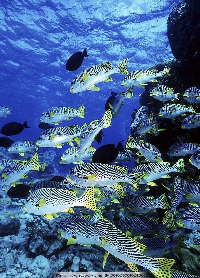 海洋生物 海底游泳 海底世界 人物 潜水 珊蝴 礁石 鱼类 鱼
