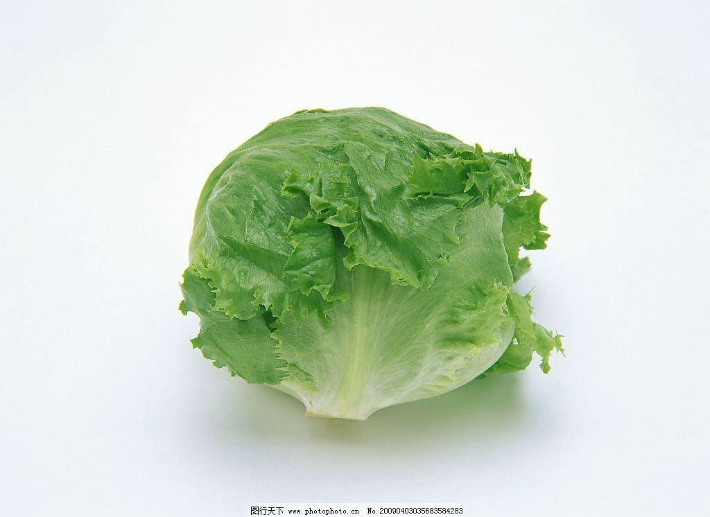 卷心菜 一个 绿色 生物世界 蔬菜 摄影图库 350dpi jpg