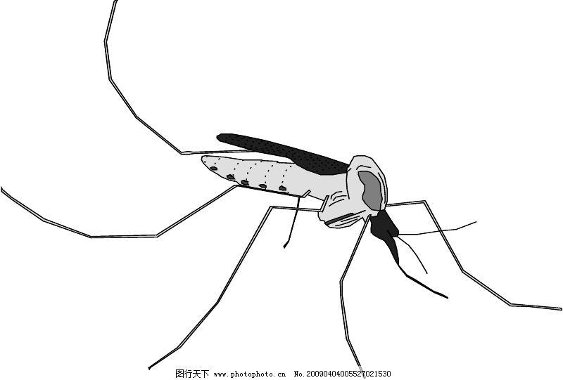 简笔画 昆虫 手绘