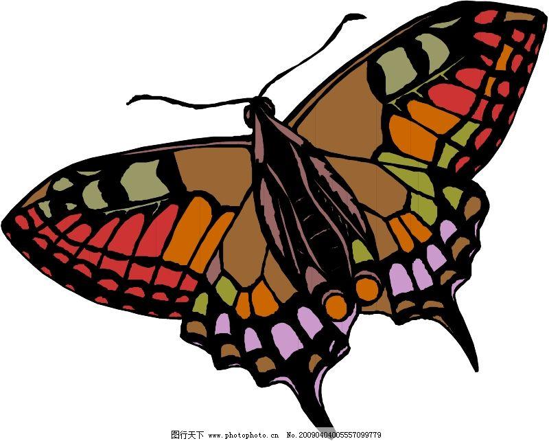昆虫蝴蝶0195