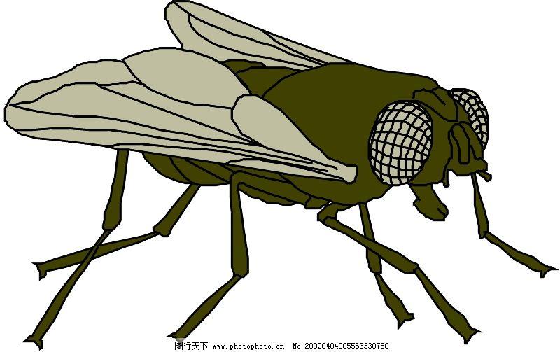动物 昆虫蝴蝶 类