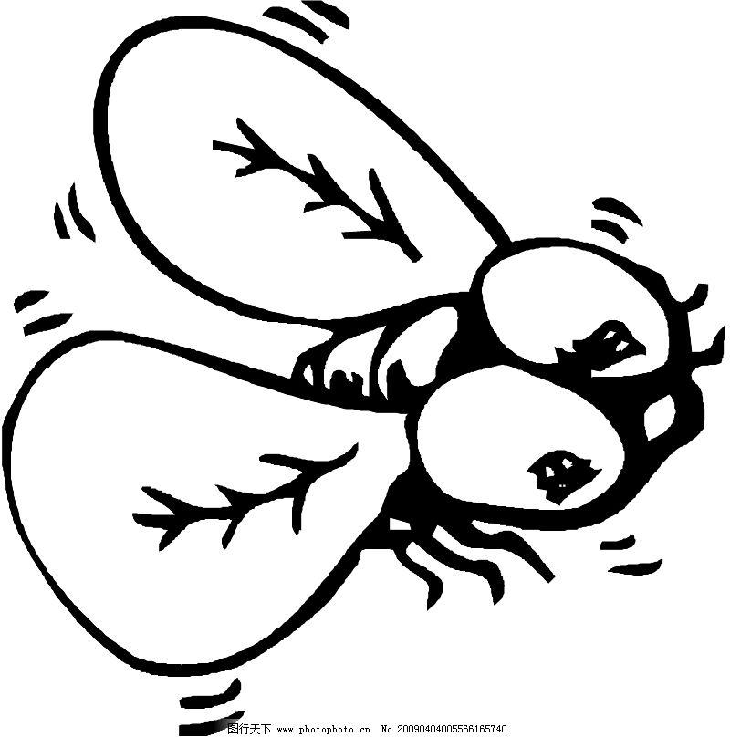 昆虫蝴蝶0506 动物 类
