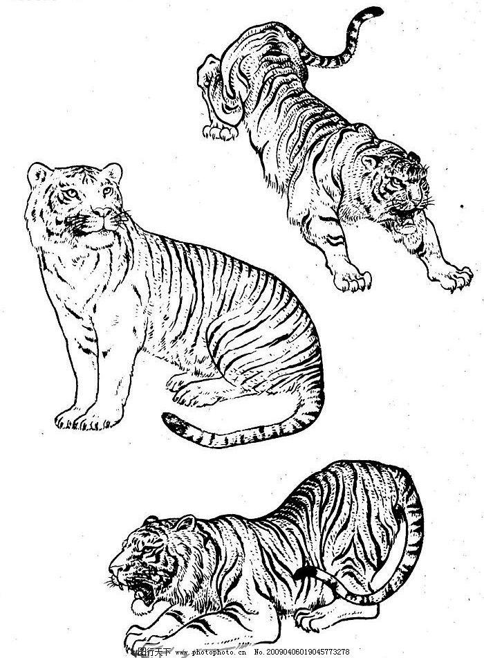 美术 画 老虎 兽王 百虎谱 文化艺术 绘画书法 设计图库 72dpi jpg
