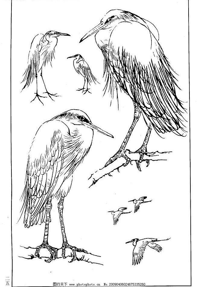 百鸟谱 鹭 百鸟 百鸟图 鸟类 鸟兽 花鸟 小鸟 白描 线描 黑白稿 绘画 工笔花鸟 工笔 王满良 梁熔 美术 美术出版社 生物世界 设计图库 350DPI JPG