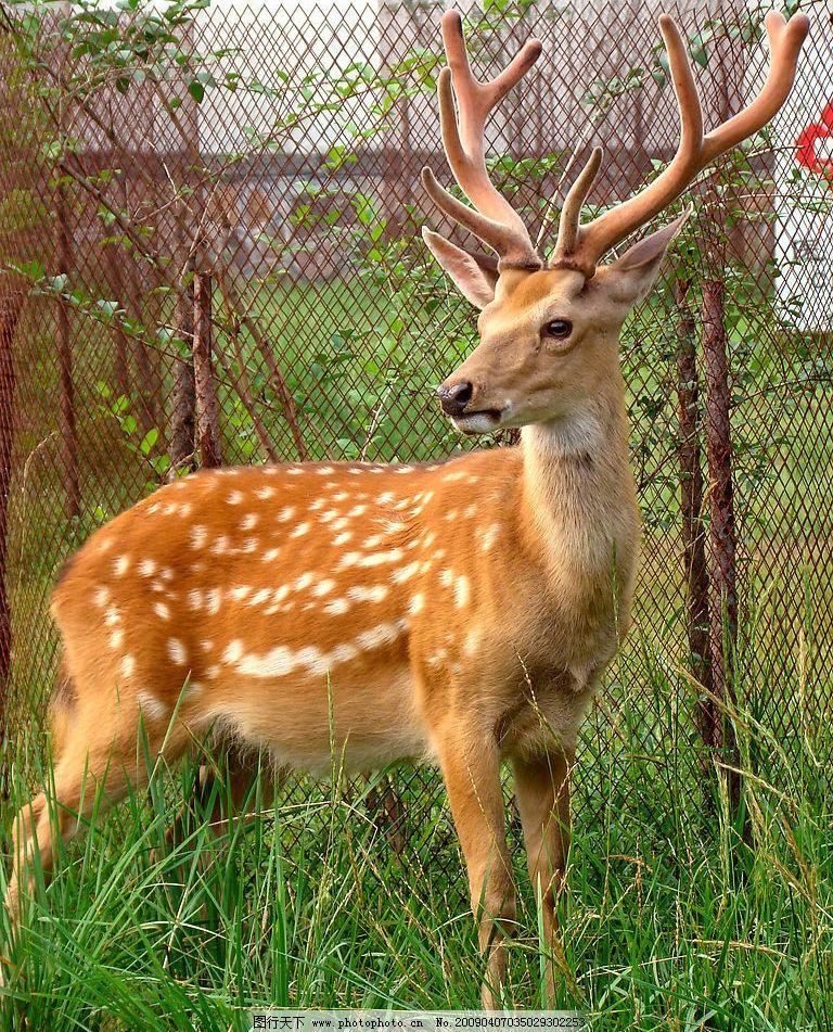 小鹿2图片_野生动物_生物世界