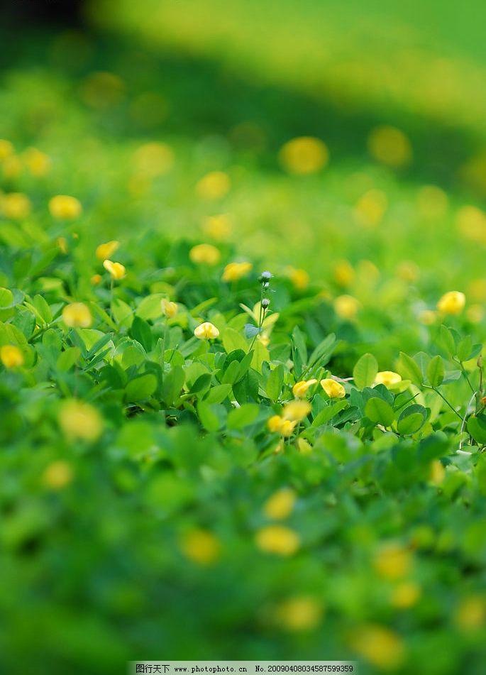 草地壁纸高清 绿色草地手机壁纸微信护眼绿色草地