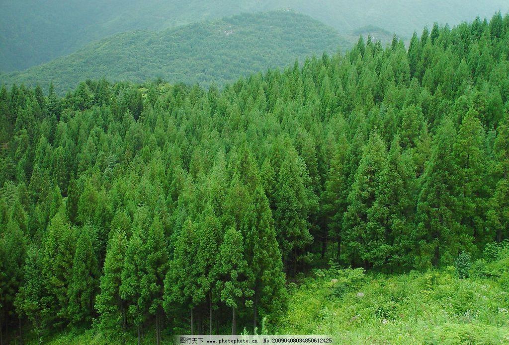 大森林 大树 森林 山林 林区 树木 自然景观 自然风景 摄影图库 72dpi