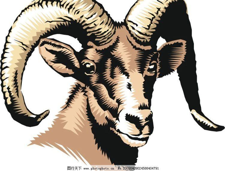 藏羚羊 藏羚羊角 羊角 羊头 羊毛 生物世界 家禽家畜 矢量图库 cdr