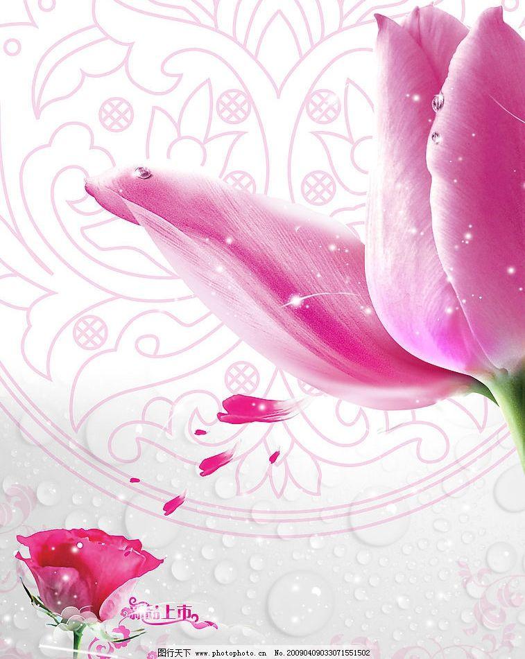 玫瑰 花 花瓣 花纹 背景图片