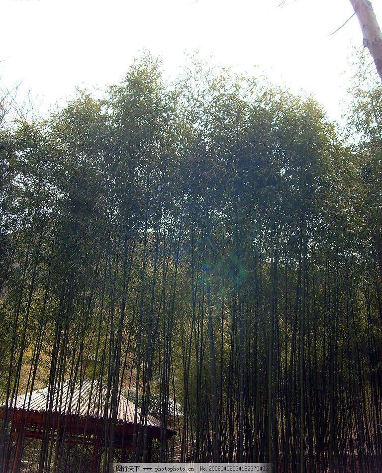 美丽竹林图片图片