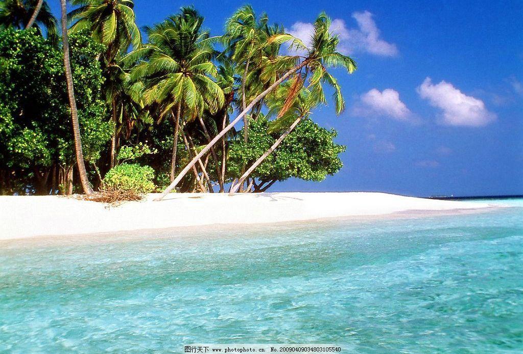 海边的椰子树图片_自然风景