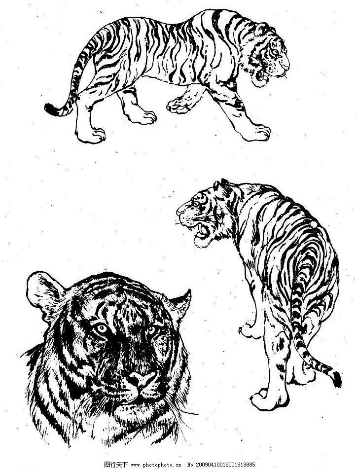 百虎谱41 百虎图 绘画 黑白稿 线描 白描 工笔 国画 写意