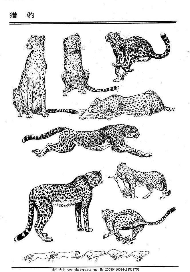动物 白描 线描 绘画 美术 禽兽 野生动物 画兽谱 豹 生物世界 设计
