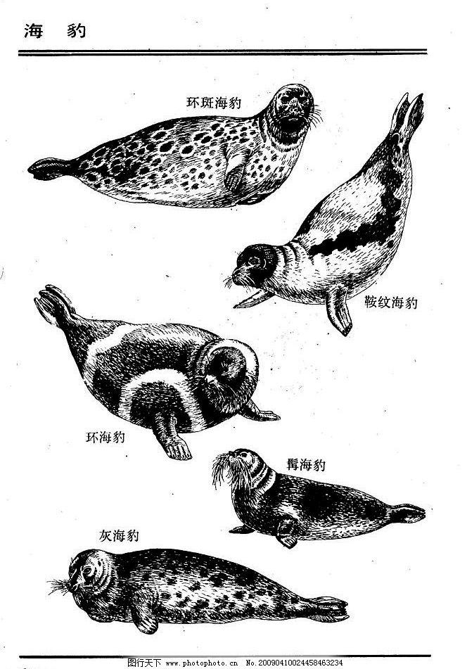 画兽谱72 海豹 百兽 家禽 猛兽 动物 白描 线描 绘画 美术