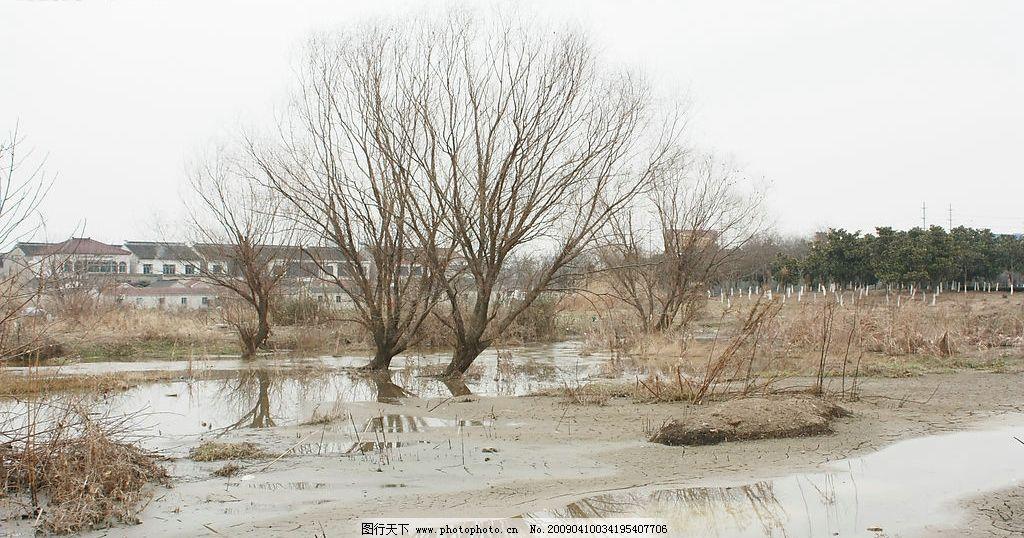 两棵树 树林 村庄 水 枯草 石子 风景照 旅游摄影 摄影图库