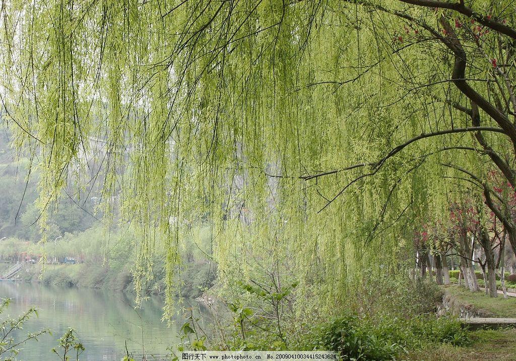 杨柳 宜昌 三峡 长阳 清江 春天 自然景观 山水风景 摄影图库 72dpi