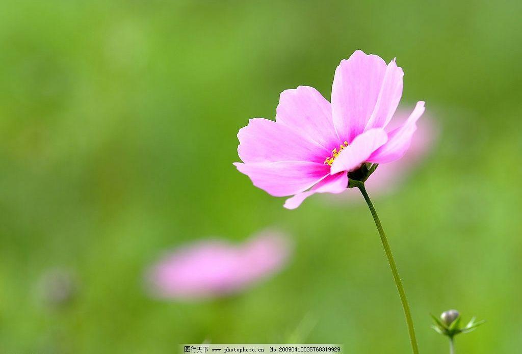 粉色 花朵 淡雅 绿色 桌面 背景 衬托 夏季 夏天 轻风 可爱 花瓣 植物