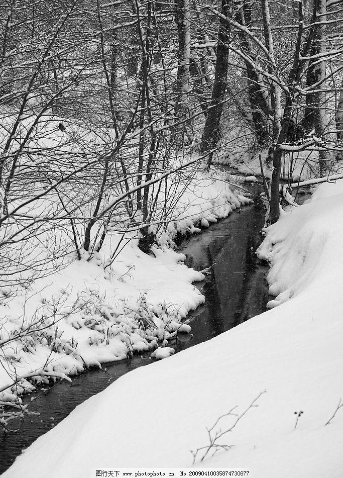 树木 tree 冬天 树林 雪地 下雪 小溪 黑白摄影 摄影图库 生物世界