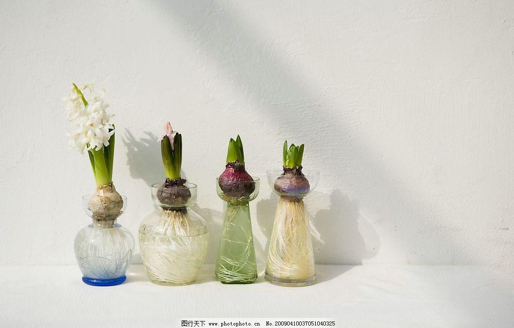 花瓶 水仙花 玻璃瓶 几种花 白色墙 生活百科 生活素材 摄影图库 350