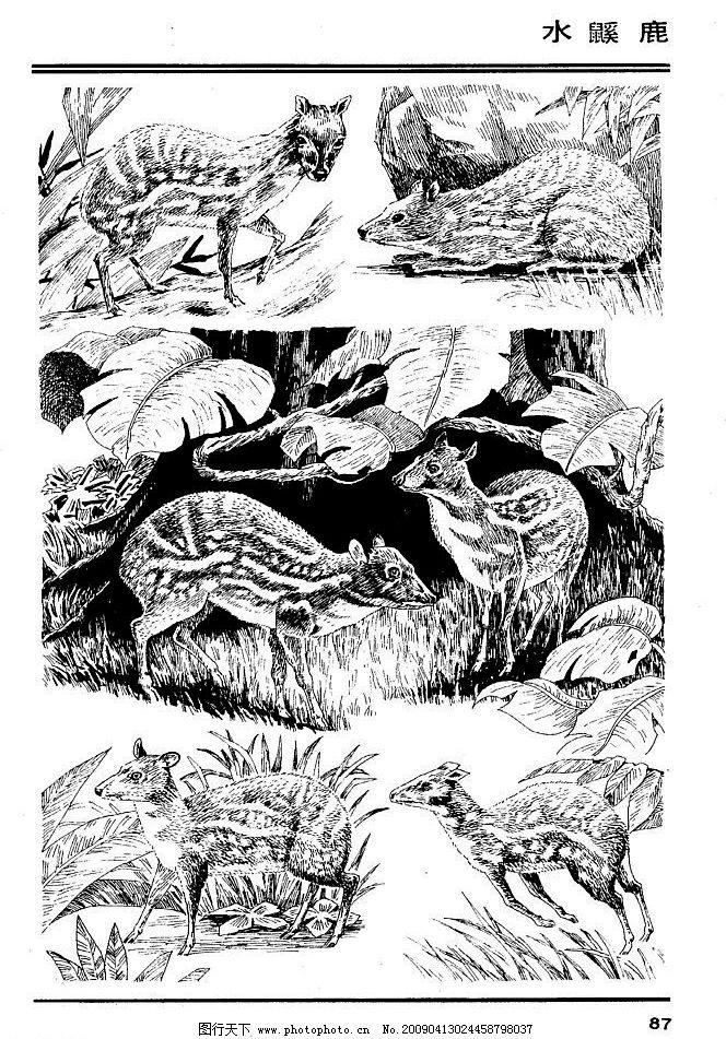 兽 家禽 猛兽 动物 白描 线描 绘画 美术 禽兽 野生动物 百兽图 鹿 生