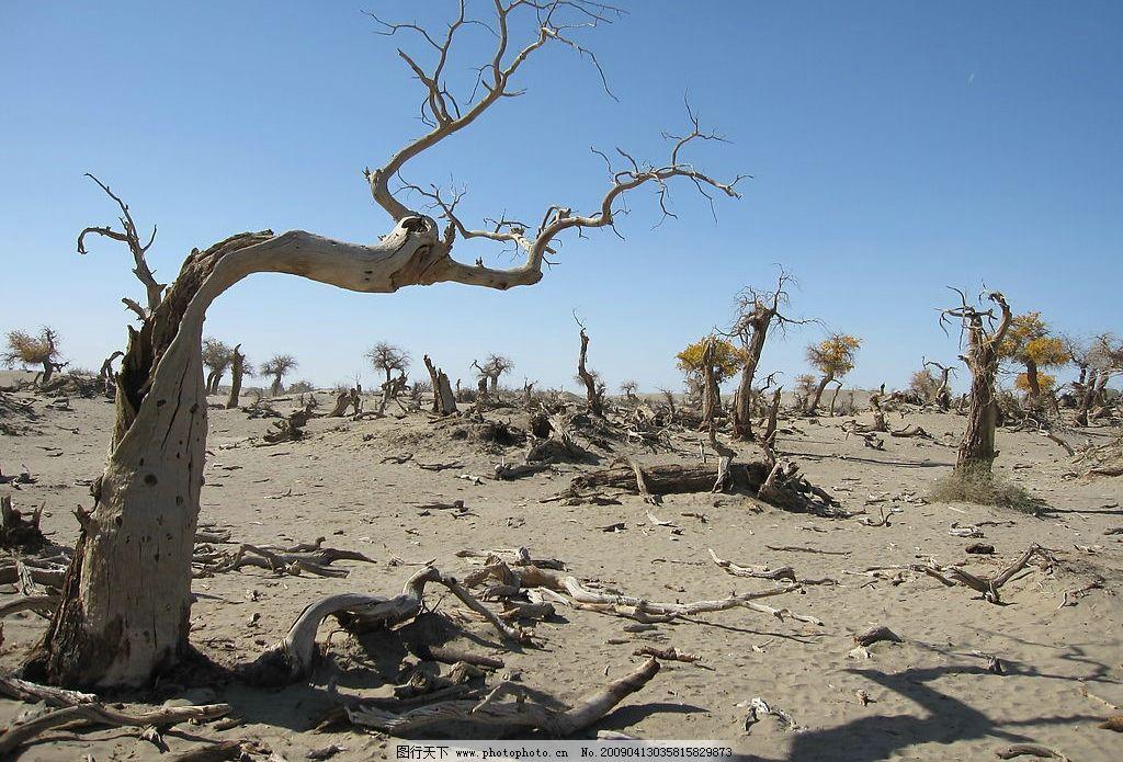 胡杨 沙化 干涸 沙漠 戈壁 怪树林 枯树 胡杨林 生物世界 树木树叶