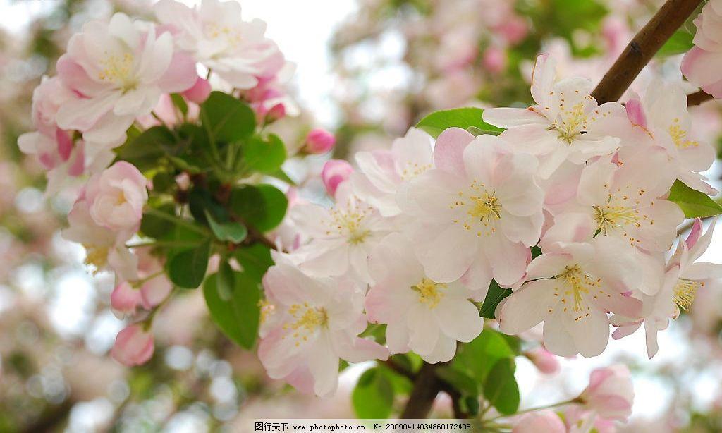 桃花 春光浪漫 旅游摄影 自然风景 摄影图库 300dpi jpg 自然景观