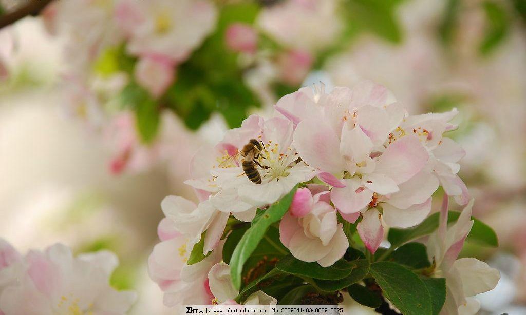 桃花 春光浪漫 自然景观 自然风景 摄影图库 300dpi jpg