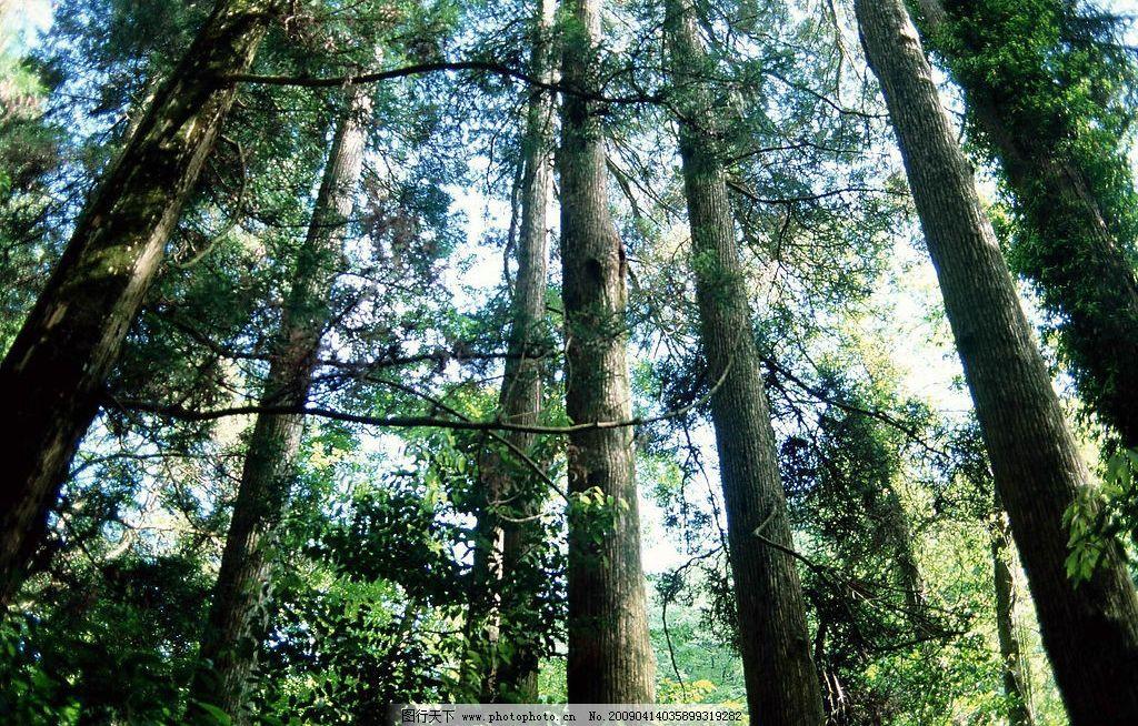 树林图片_树木树叶_生物世界_图行天下图库