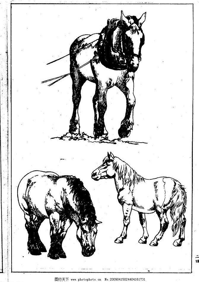 百马谱 马 白马 百马 白描 线描 黑白稿 手绘 绘画 动物 野马 骏马