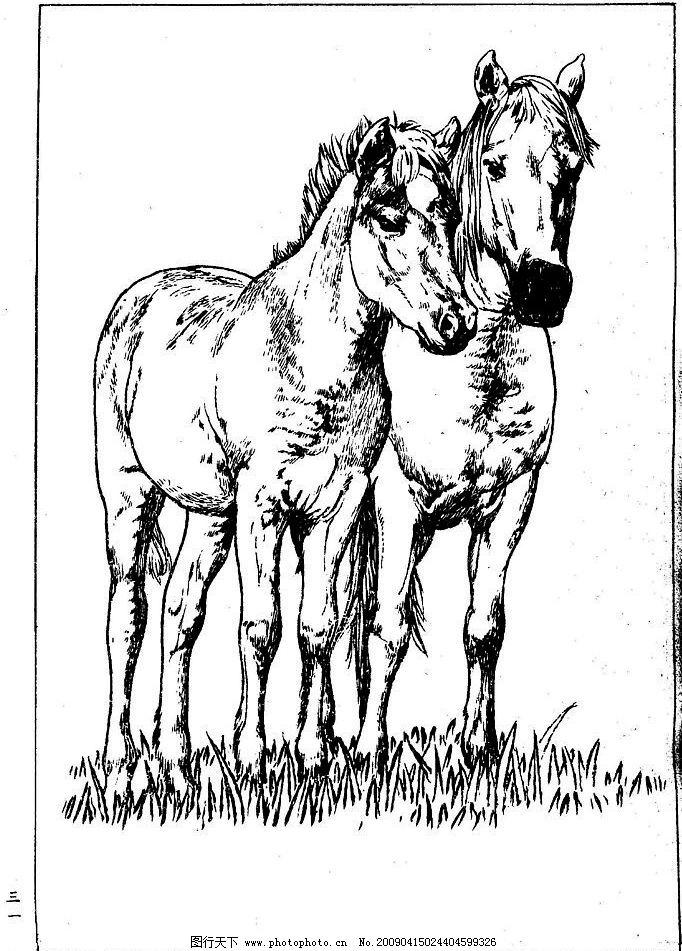 百马图31 百马谱 马 白马 百马 白描 线描 黑白稿 手绘 绘画 动物