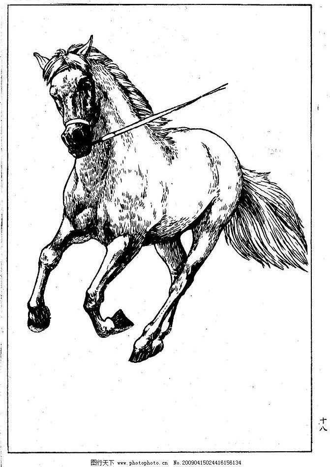 百马图18 百马谱 马 白马 百马 白描 线描 黑白稿 手绘 绘画 动物