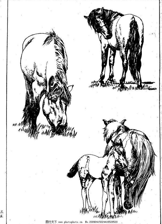 百马图35 百马谱 白马 白描 线描 黑白稿 手绘 绘画 动物