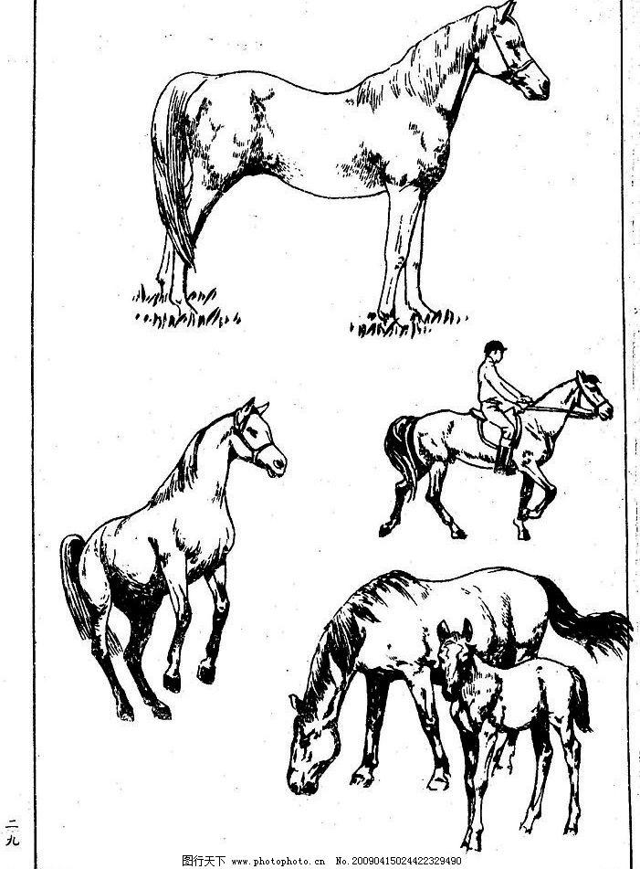百马图29 百马谱 白马 白描 线描 黑白稿 手绘 绘画 动物