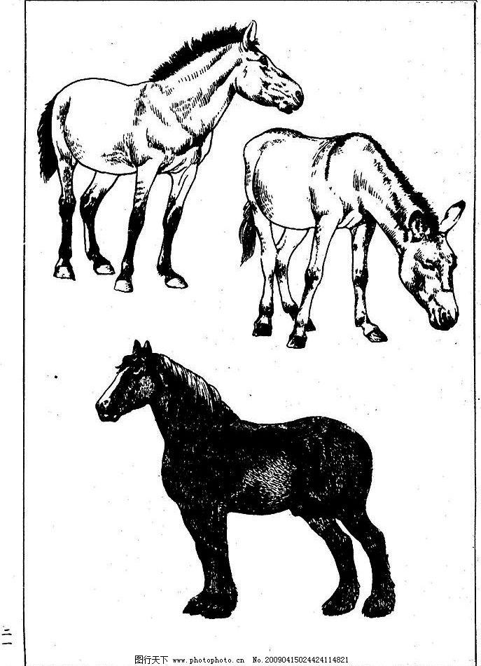 百马图21 百马谱 马 白马 百马 白描 线描 黑白稿 手绘 绘画 动物