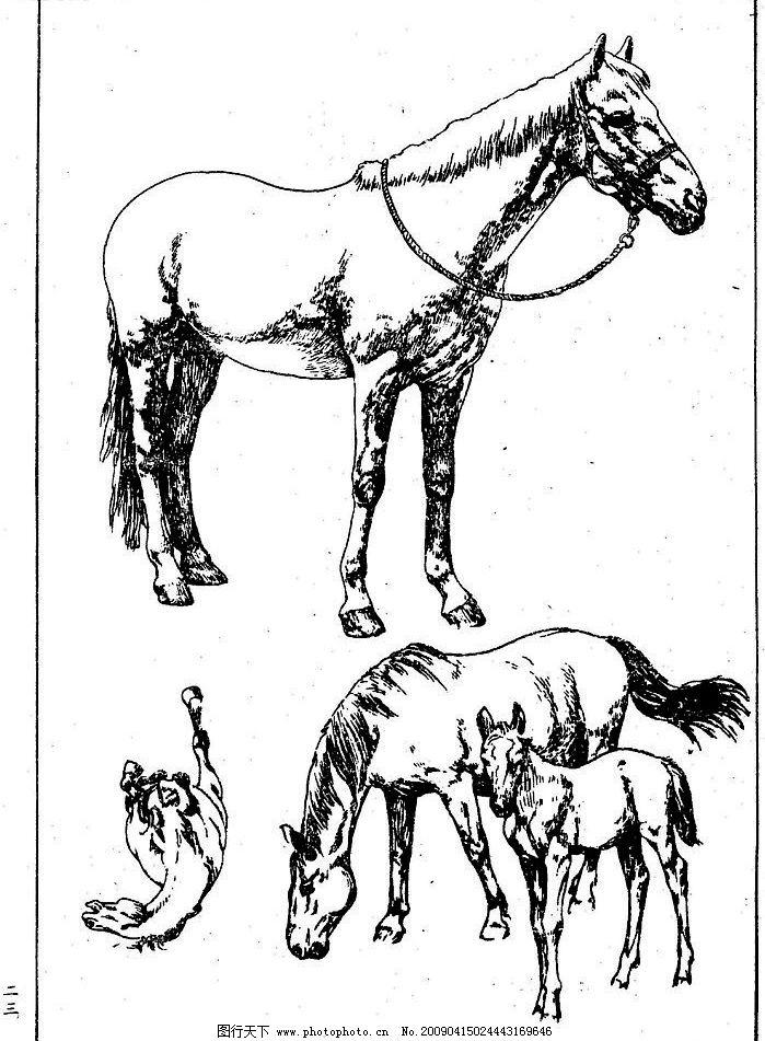 百马图23 百马谱 马 白马 百马 白描 线描 黑白稿 手绘 绘画 动物