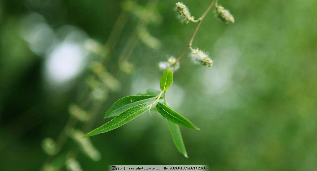柳絮飘飞 柳絮 飘飞 春天 绿色 自然景观 自然风景 摄影图库 72dpi