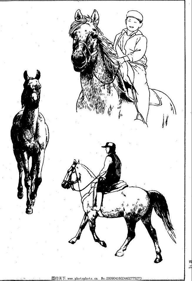 百马图42 百马谱 马 白马 百马 白描 线描 黑白稿 手绘 绘画 动物