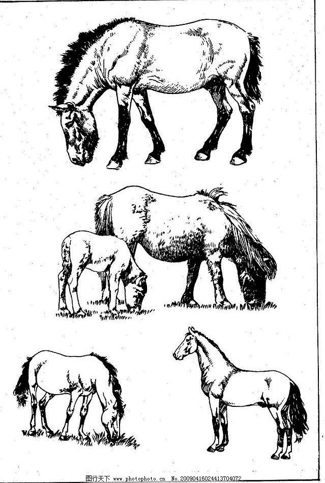 百马图48 百马谱 马 白马 百马 白描 线描 黑白稿 手绘 绘画 动物