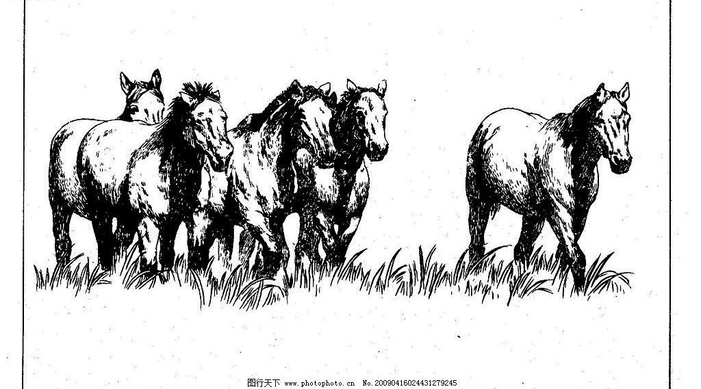 百马图56 百马谱 白马 白描 线描 黑白稿 手绘 绘画 动物