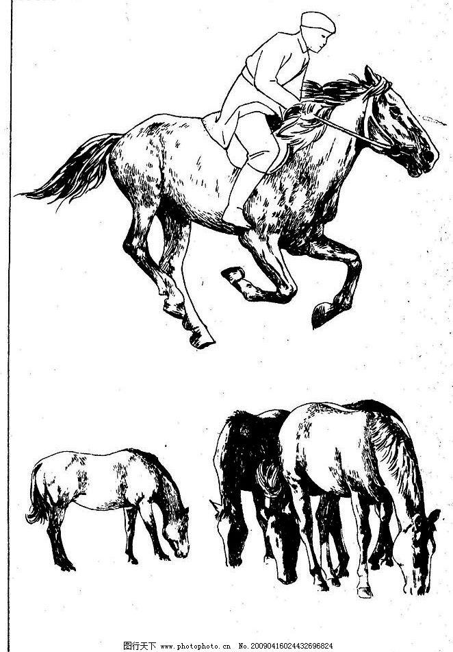 百马图43 百马谱 马 白马 百马 白描 线描 黑白稿 手绘 绘画 动物