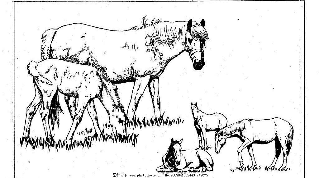 百马图68 百马谱 马 白马 百马 白描 线描 黑白稿 手绘 绘画 动物