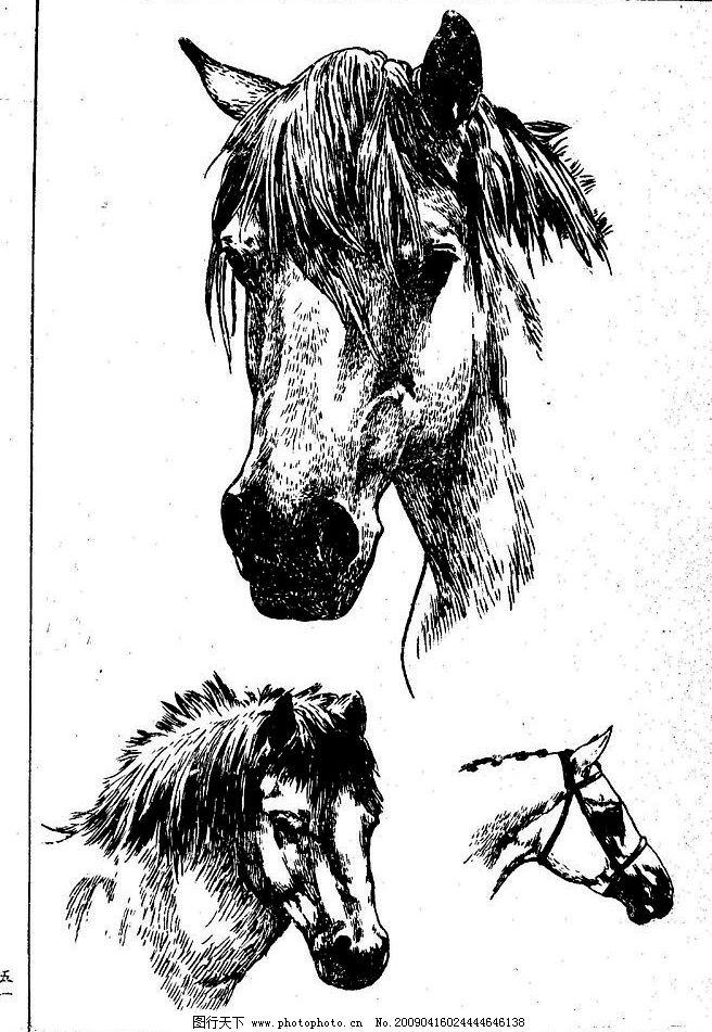 百马图51 百马谱 马 白马 百马 白描 线描 黑白稿 手绘 绘画 动物